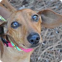 Adopt A Pet :: Rico - Atlanta, GA