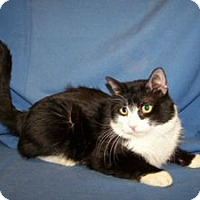 Adopt A Pet :: Cushy - Colorado Springs, CO