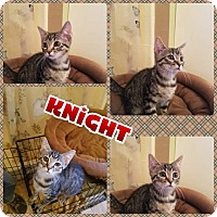 Adopt A Pet :: Knight - Scottsdale, AZ