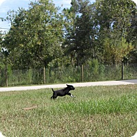 Adopt A Pet :: Skye - Weeki Wachee, FL