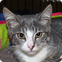 Adopt A Pet :: Cambell - North Branford, CT
