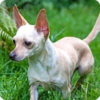 Adopt A Pet :: Chloe - Tacoma, WA