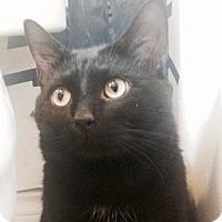 Adopt A Pet :: Stormageddon - Toronto, ON