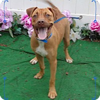 Adopt A Pet :: RORY-see video - Marietta, GA