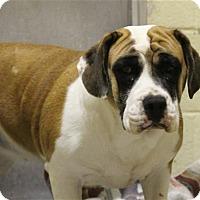 Adopt A Pet :: Candy Corn - Elyria, OH