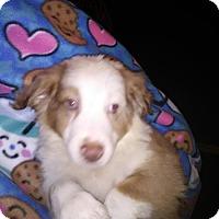 Adopt A Pet :: Holden Orlando - Orlando, FL