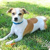 Adopt A Pet :: CHRISSY - Irvine, CA