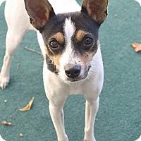 Adopt A Pet :: Ebony - Athens, AL
