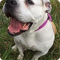 Adopt A Pet :: ZOE - Newport, OR