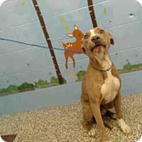 Adopt A Pet :: A499708 - San Bernardino, CA