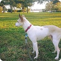 Adopt A Pet :: KOBE - Media, PA