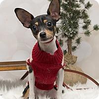 Adopt A Pet :: Dewey~Adoption Pending - Troy, OH