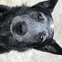 Adopt A Pet :: Conway - Remus, MI