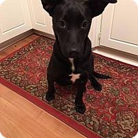 Adopt A Pet :: Riley - Chaska, MN