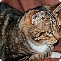 Adopt A Pet :: Sebastian - Laingsburg, MI