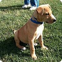 Adopt A Pet :: Noah - Southampton, PA
