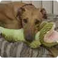 Adopt A Pet :: Gabe - Oak Ridge, NC