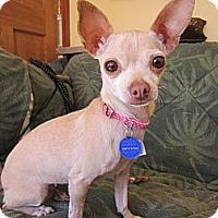 Adopt A Pet :: Nala - 5 lbs-Adopted. - Warwick, NY