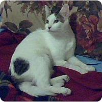 Adopt A Pet :: Della - Brea, CA