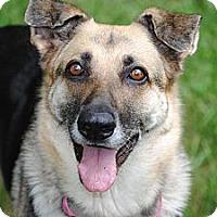 Adopt A Pet :: **URGENT**Dallas - Shrewsbury, NJ