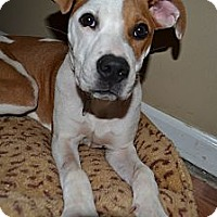Adopt A Pet :: Daphne - Marietta, GA