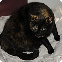 Adopt A Pet :: Cinamon - Plainville, MA