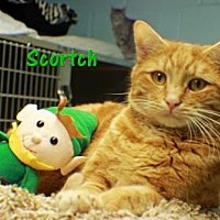 Adopt A Pet :: Scorch - Ocean View, NJ