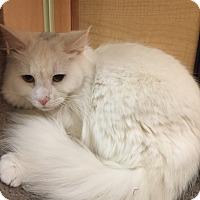 Adopt A Pet :: Warren - Monroe, GA