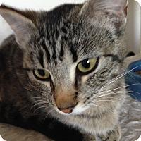Adopt A Pet :: shelby - San Ramon, CA