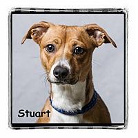 Adopt A Pet :: Stuart - Warren, PA