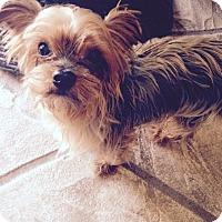 Adopt A Pet :: Lea - North Port, FL