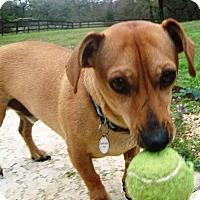 Adopt A Pet :: Nico - Humble, TX