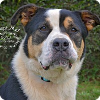 Adopt A Pet :: Coco - Fort Valley, GA