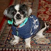 Adopt A Pet :: Curly - Ventura, CA