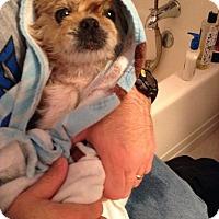 Adopt A Pet :: Bowie - Virginia Beach, VA