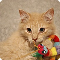 Domestic Mediumhair Cat for adoption in Lincoln, Nebraska - Pink