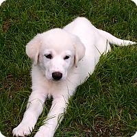 Adopt A Pet :: Jarvis *Adopted - Tulsa, OK