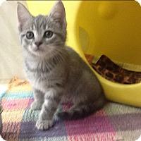 Adopt A Pet :: Sugar - Warren, OH