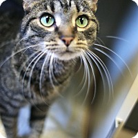 Adopt A Pet :: Robert - Appleton, WI