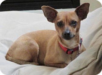 Terrier (Unknown Type, Medium) Mix Dog for adoption in Georgetown, Colorado - Brenna