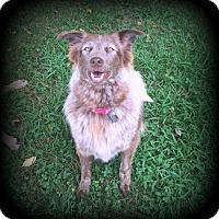 Adopt A Pet :: Gracie - Denver, NC