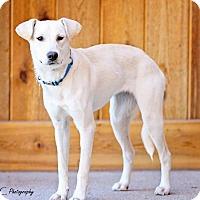 Adopt A Pet :: Indra - Salt Lake City, UT