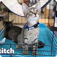 Adopt A Pet :: Stitch - Mission Viejo, CA