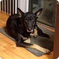Adopt A Pet :: Michonne - Walnut Creek, CA