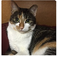 Adopt A Pet :: Penelope - San Carlos, CA