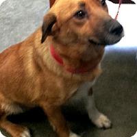 Adopt A Pet :: Cassie - Aurora, IL