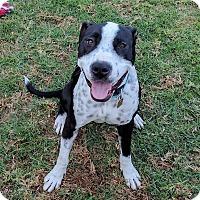 Adopt A Pet :: Pepper (female) - Bellflower, CA
