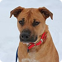 Adopt A Pet :: Mario - Hastings, NY
