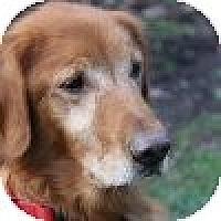 Adopt A Pet :: Duke - Yorktown, VA