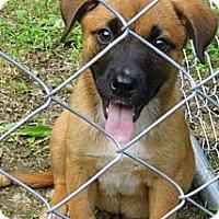 Adopt A Pet :: Darla - Jarrettsville, MD